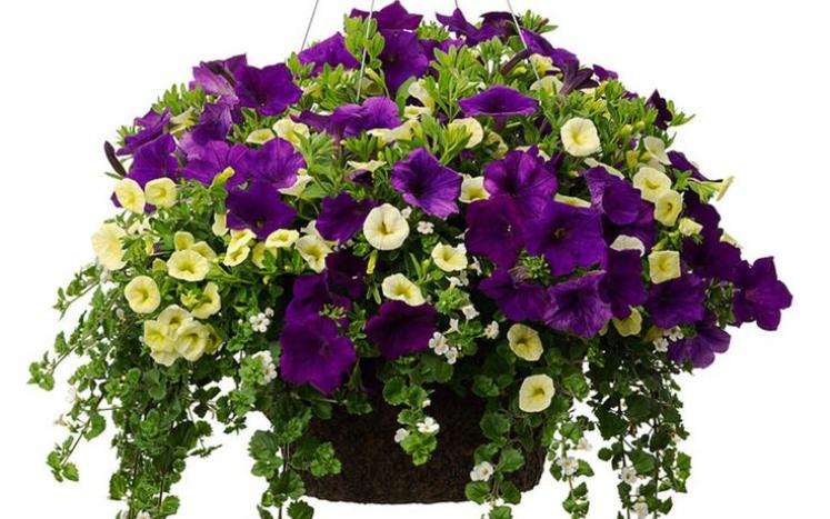 HANGING FLOWERS BASKETS